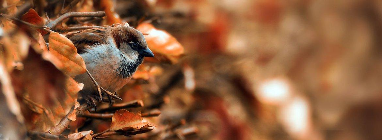 Huismus / Shutterstock