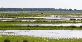 Zuidlaardermeergebied / Agami - Martijn Verdoes