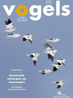 Cover Vogels 1905