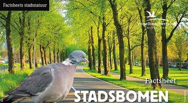 Download factsheet straatbomen