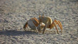 Krab in Oman / Pixabay