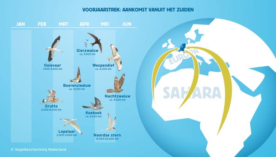 Infographic vogeltrek voorjaar, 2019