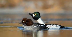 Brilduiker / Shutterstock