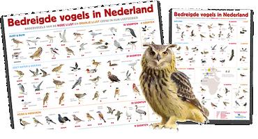 Posters bedreigde vogels