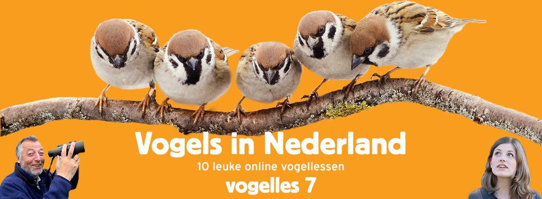 Vogels in Nederland - Vogelles 7