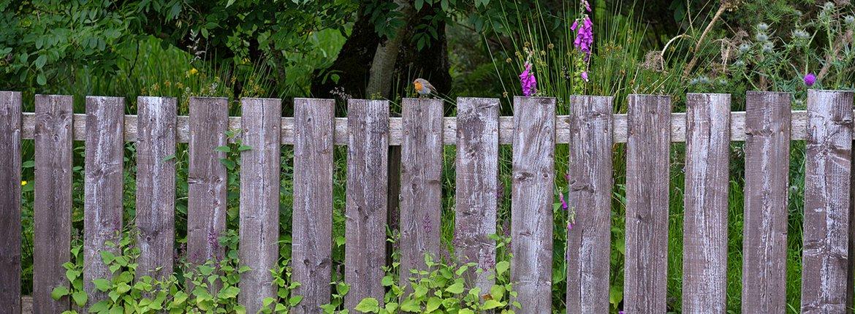 Roodborst op schutting / Shutterstock