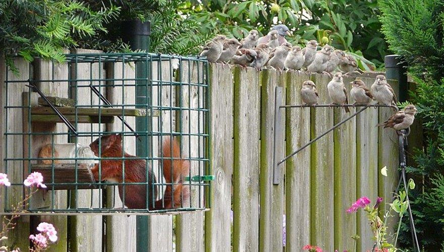 Houtduif huismus eekhoorn / Mieke Alberts via VIC