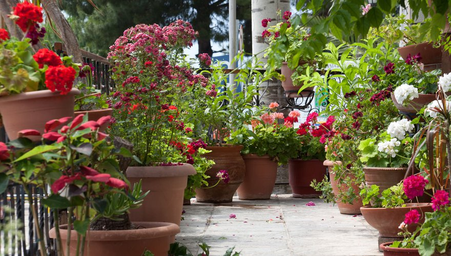 Balkon planten / Shutterstock