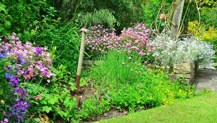 Border in tuin / Shutterstock