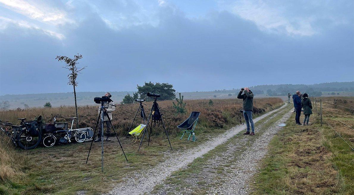 Telpost Hoog Buurlose Heide / Maarten Kaales
