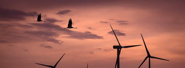 Windmolens en kraanvogels / Pixabay