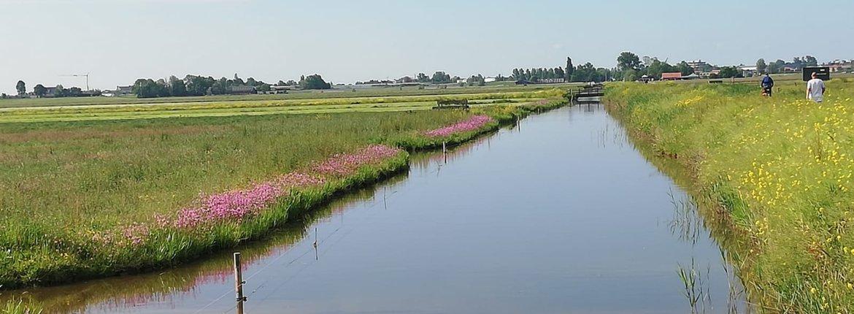 Rijke Weidevogelboulevard Amstelland / Celine Roodhart