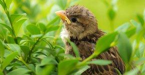 Huismus jong / Shutterstock
