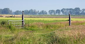 Landschap Sjoerd Miedema / Fred van Diem