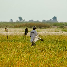 Rijstveld West Afrika / Lars Soerink