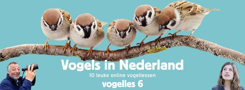 Vogels in Nederland - Vogelles 6