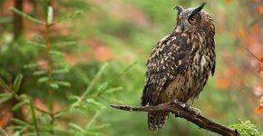 Oehoe / Shutterstock