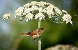 Vogel parasol