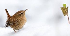 Winterkoning / Shutterstock