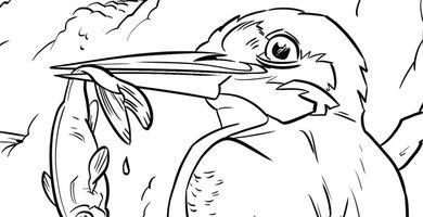 Kleurplaat ijsvogel