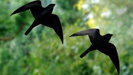 Raamstickers Vogelbescherming