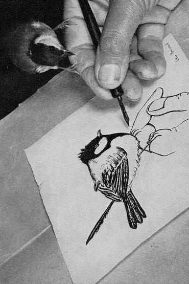 Vogels als huisgenoten