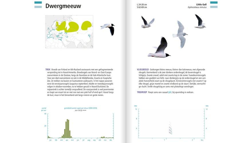 Spread dwergmeeuw Veldgids Vogeltrek