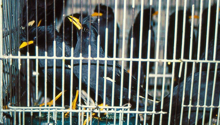 Vogelmarkt Azië