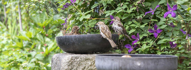 Huismussen in tuin / Shutterstock