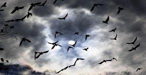 Vogels in de nacht / Shutterstock