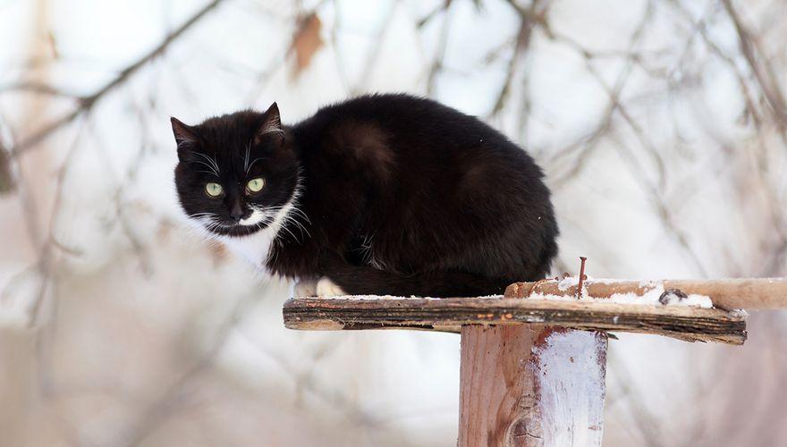 Kat op voedertafel / Shutterstock