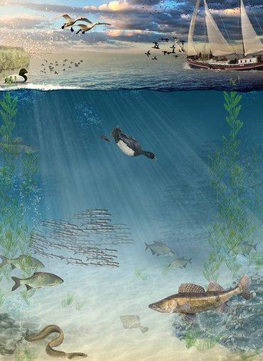 Onderwaterkaart IJsselmeer