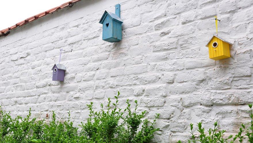 Nestkasten tegen muur bij buxus / Pixabay