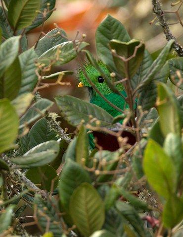 Quetzal / Hans Peeters