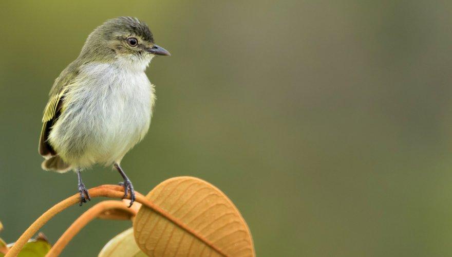Brilvliegenpikker / Shutterstock