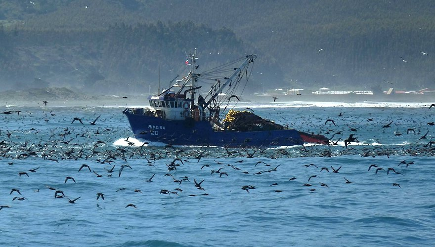 Purse seine visserij / Luis Cabezas