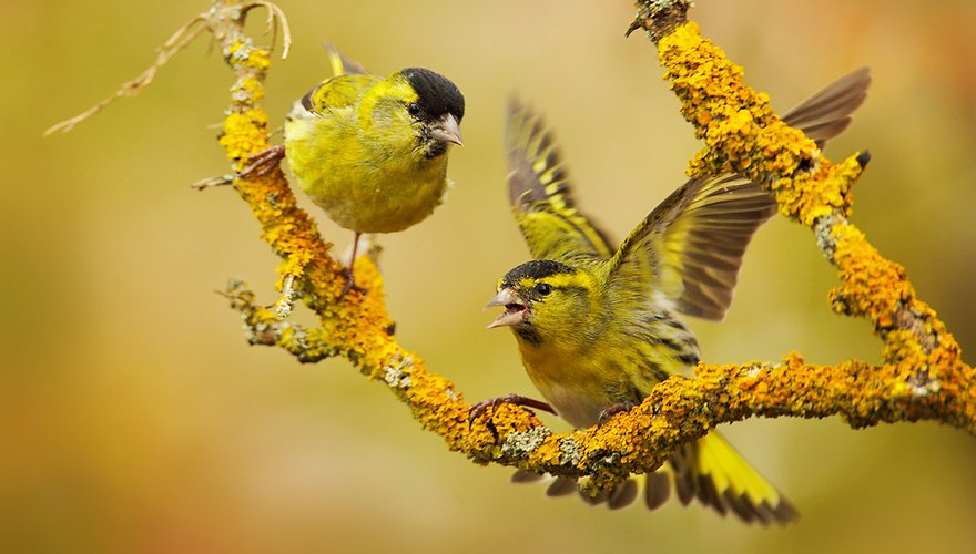 Sijs / Shutterstock