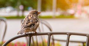 Huismus in de stad / Shutterstock