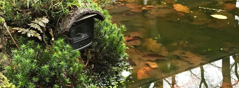 webcam bij vijver