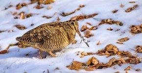 houtsnip / Shutterstock