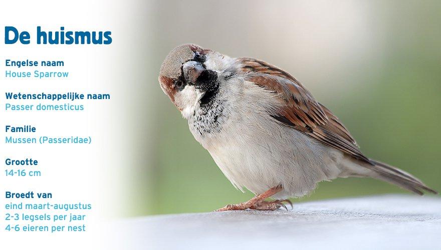 Huismus paspoort tuinvogelcursus