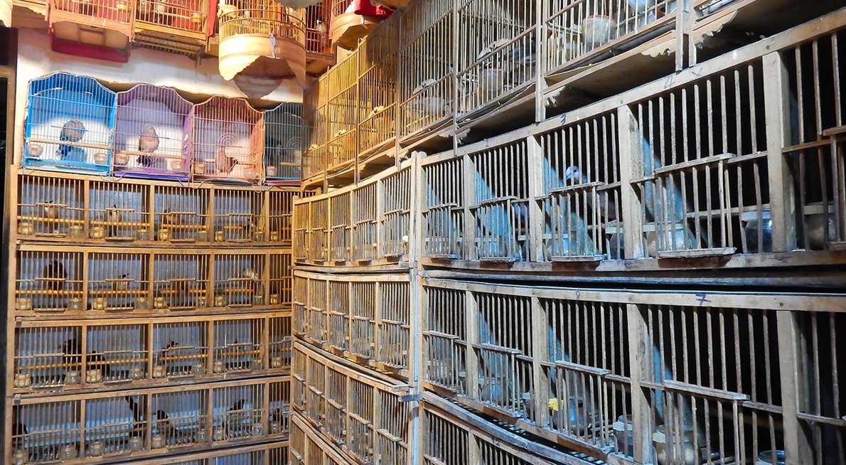 Vogelwinkel Hanoi / Nature in Stock