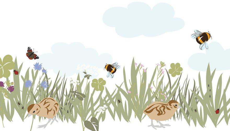 Insectenrijk grasland / Anne-Lieke Struijk