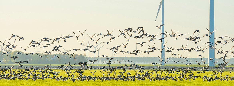 Windmolens en vogels / Shutterstock