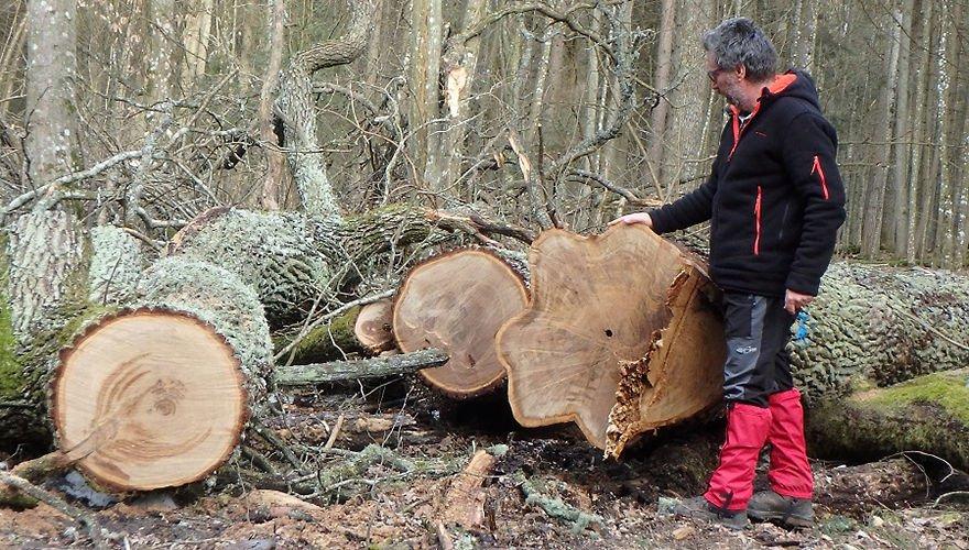 Bialowieza forest / Ariel Brunner