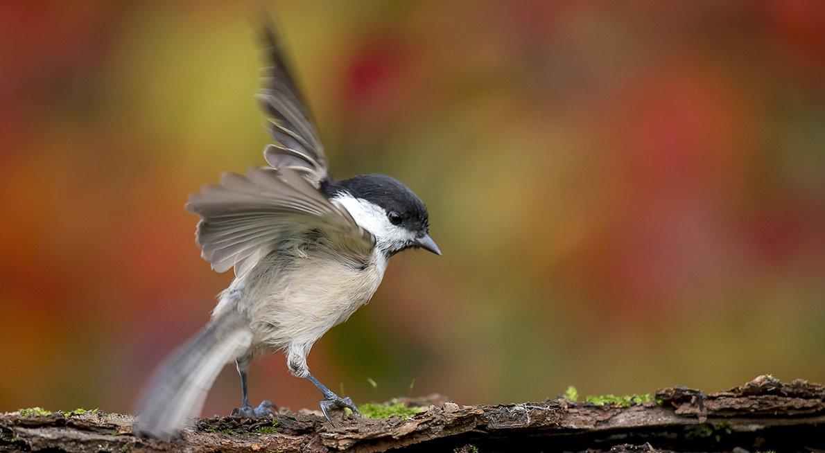 Glanskop / Shutterstock