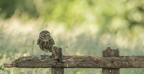 Steenuil / Shutterstock