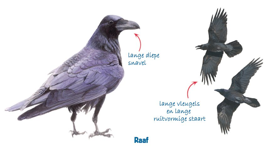 Infographic raaf