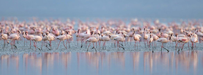 Kleine flamingo / Shutterstock
