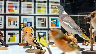 Blockbirds